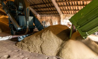 Nigeria's Flour Mills' shares hits record low as investor sentiment shifts