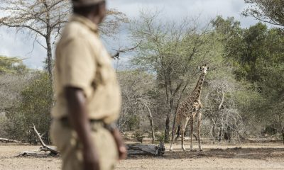 26 big game-hunting blocks to be auctioned in Tanzania
