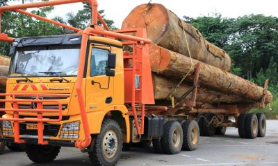 Mystery in Gabon: Illegal haul of sacred wood disappears