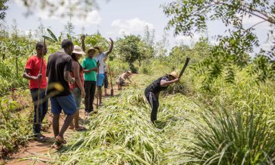 "Participants to an ""agro-bootcamp"", aimed at preparing young people for a future sustainably working the land, are seen cheer as a colleague uses a machete on a plant"