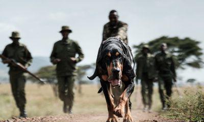 Kenya tech battles poachers