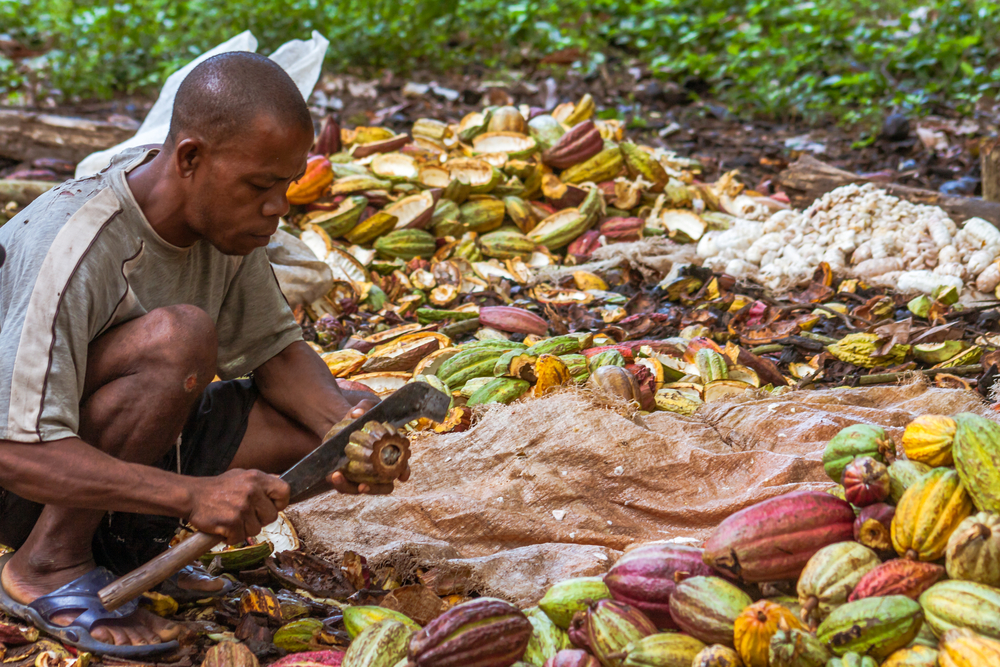 End times: Will time spare the cocoa plantations of Sao Tome and Principe?