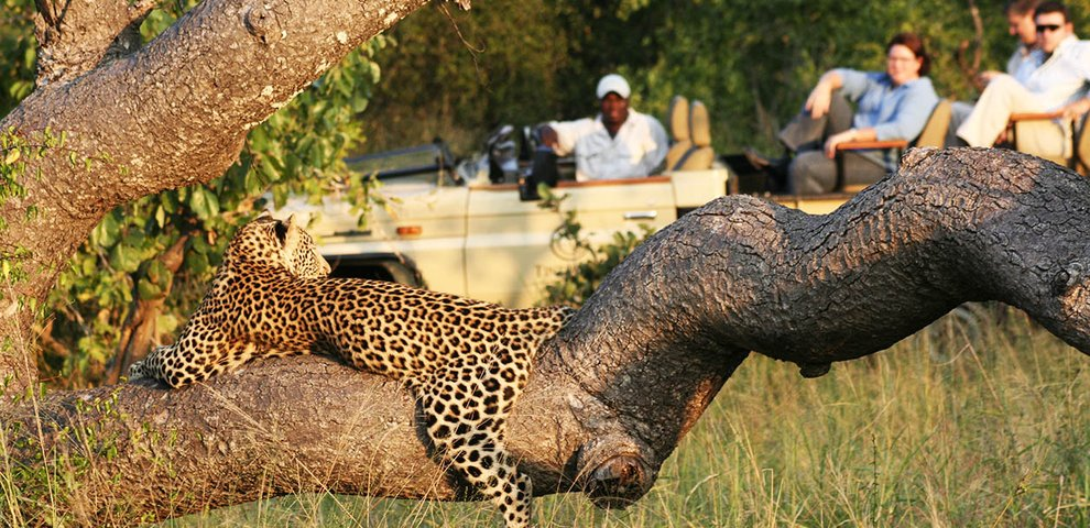 South African toddler killed by leopard in Kruger park