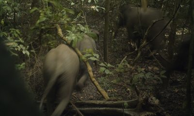 Nigeria's megacity elephants face deforestation threats