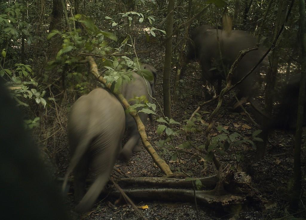Nigeria's megacity elephants face deforestation threats