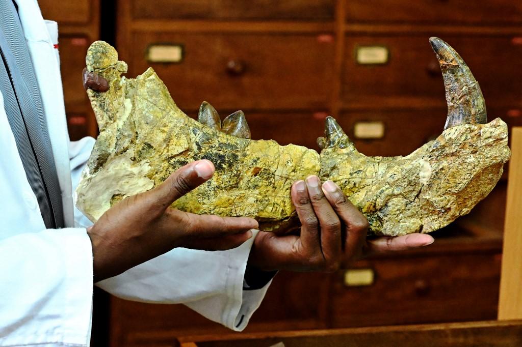Newly-discovered giant 'simbakubwa kutokaafrika