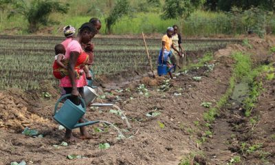 """Restored peace raises hope for the return of """"Garden of Congo"""""""
