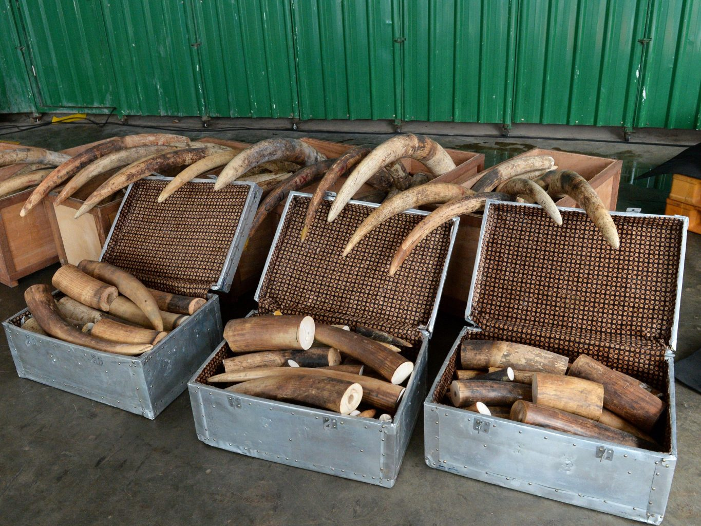 Singapore to ban domestic Ivory trade from 2021