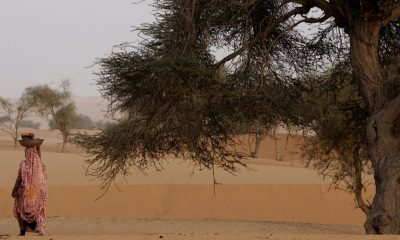 Ambitious UN-backed tree planting effort takes off in the Sahel