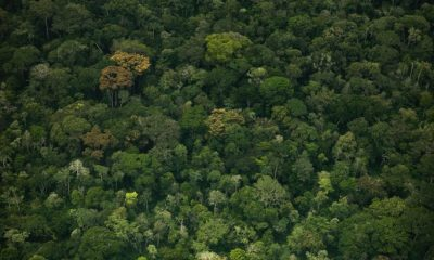 Republic of Congo to save Rainforest