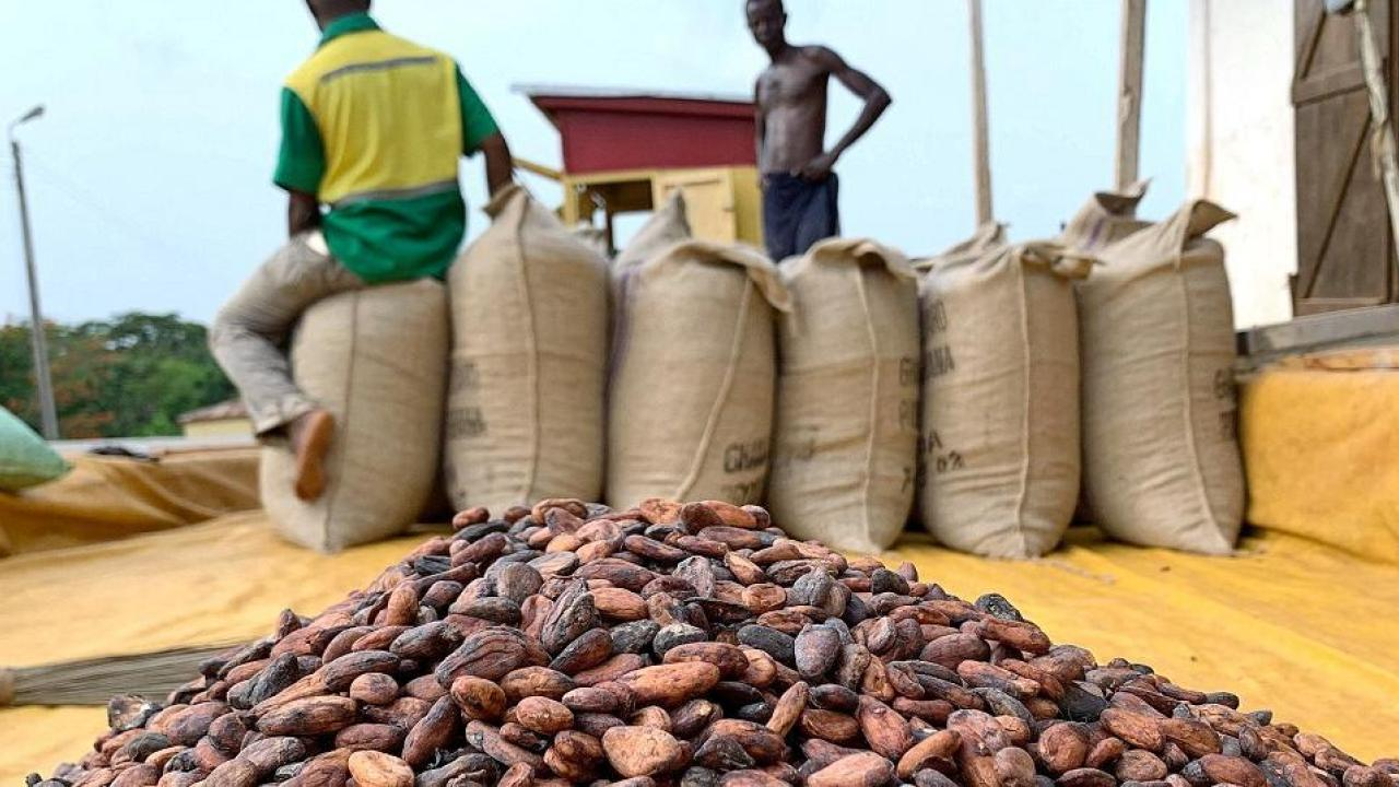Nigeria, Cameroon to plan Cocoa price cartel