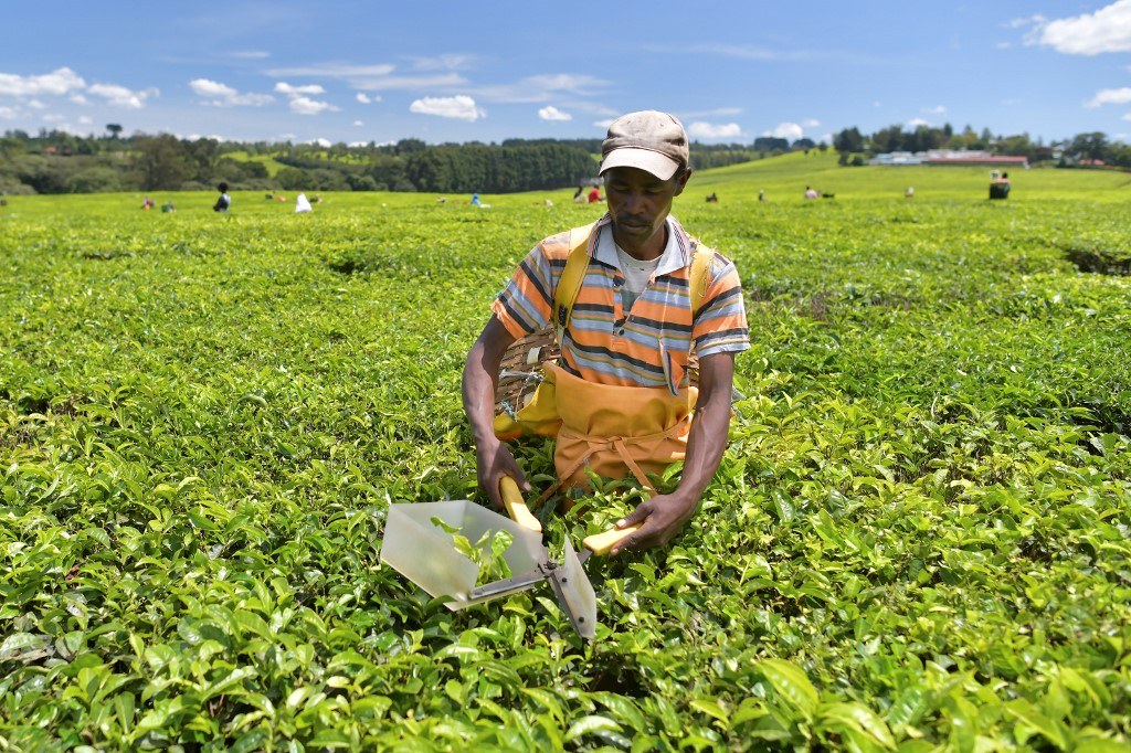Blood tea: The UK's alleged land theft and Kenya's demand for justice