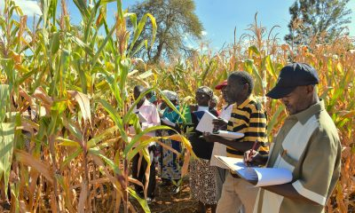 Maize price soars in Tanzania